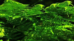 Green fern in the summer forest Stock Footage