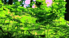 Shelter in the middle of fern Stock Footage