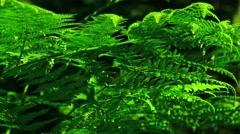 Intensive green fern Stock Footage