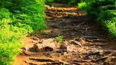 A path in the forest Stock Footage