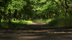 Empty road running through tree alley Stock Footage
