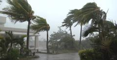 Palm Trees Thrash In Powerful Hurricane Wind - stock footage