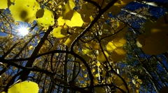 View of Aspen leaves in Fall with Sun Flares - stock footage