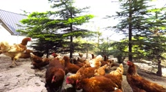 Chickens on a country farm Stock Footage