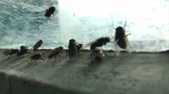 Family of flies at a frozen window. Slow motion. Stock Footage