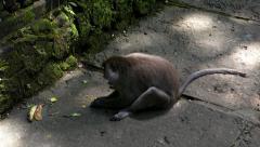 Monkey working Stock Footage