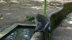 Monkey drinking water and washing hands Stock Footage
