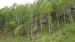 Birch trees on the rocks, the river Serga, Urals, Russia. 1280x720 Stock Footage