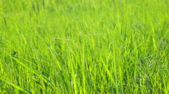 Juicy fresh green grass in the sun Stock Footage