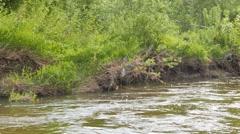 River bank. Serga, Urals, Russia. 1280x720 Stock Footage