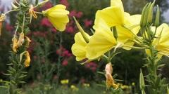 Wild flower Stock Footage