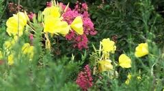 Wild flower in summer Stock Footage