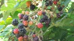Seasonal fruit in flowers Stock Footage