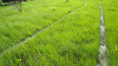 Traces of a vehicle on a fresh green grass Stock Footage