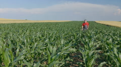 Agriculture, farmer in corn field Stock Footage