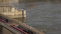 Birds on Barrage Stock Footage