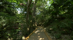 Walking in the tropical forest at the Mystic Mountain, Jamaica Stock Footage