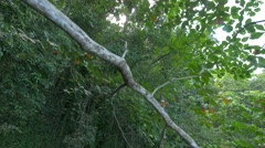 Trees with long branches at the Blue Lagoon, Jamaica Stock Footage