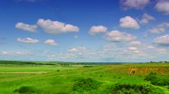 Panoramic views of meadows Stock Footage