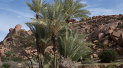 4k tafraoute palm rock formations nature morocco landscape Stock Footage