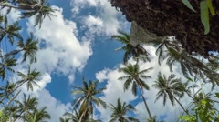 4K. Time Lapse. Palm trees against blue sky Arkistovideo