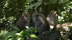 Family monkeys in the forest Stock Footage