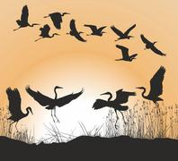 Herons and Geese - stock illustration