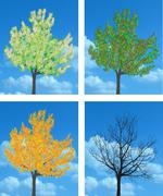 Stock Illustration of Apple tree in four seasons