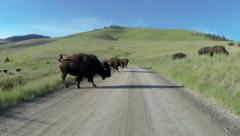Bison, Buffalo, American West Stock Footage