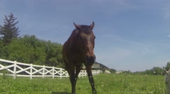 Brown Horse Eating then Walks Out of Frame Stock Footage