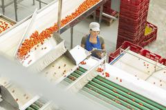 Worker with clipboard examining tomatoes in food processing plant - stock photo