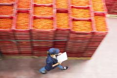 Worker with clipboard walking past tomato crates in food processing plant - stock photo