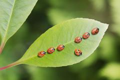 Ladybug standing out from the crowd on leaf Stock Photos