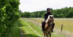 Haflinger horse, boy riding  4K Stock Footage