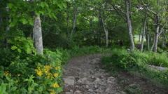 The Hawksbill Summit Trail in Shenandoah National Park, Virginia. - stock footage