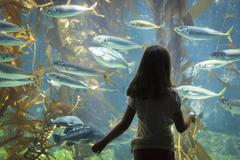 Amazed Young Girl Standing Up Against Large Aquarium Observation Glass. - stock photo