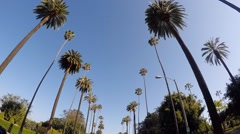 02 Palm Trees Drive. Beverly Hills, Los Angeles - California 1080p Stock Footage