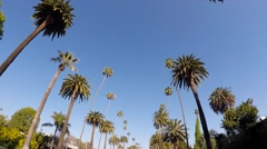 05 Palm Trees Drive. Beverly Hills, Los Angeles - California 1080p - stock footage