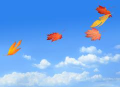 Beautiful autumn leaves carried on a breeze Stock Photos