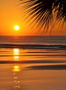 Beautiful paradise beach sunset and palm leaf - stock photo