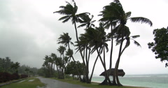 Tall Palm Trees Sway In Breeze And Rain As Hurricane Approaches Stock Footage