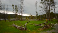 Stock Video Footage of Dead Trees In Yellowstone National Park