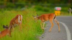 Deer Next To Roadway - stock footage