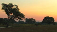 Beautiful Sunset of the South Luangwa National Park Stock Footage