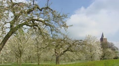 Church tower behind old-growth traditional orchard + pan fruit tree blossoms Stock Footage