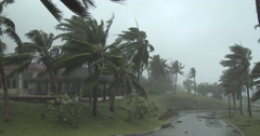 Palm Tress Struck By Strong Hurricane Winds Stock Footage