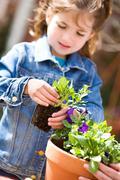 Gardening: Focus On Annual Seedling Stock Photos