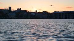 Midnight Sun dawn sunrise, Arctic tern Kria bird flock flying feeding Reykjavik  Stock Footage