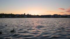 Midnight Sun dawn sunrise, Arctic tern Kria bird flock ducks Reykjavik Iceland Stock Footage