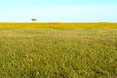 Open nature - stock photo